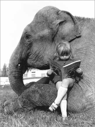 Canvas print  Girl Sits on Elephant and Reads - John Drysdale