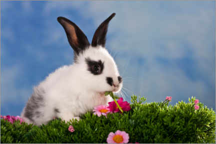 Wall sticker  Domestic rabbits in flower meadow - Doreen Zorn