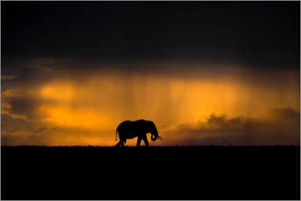 Premium poster  Elephant in the rain storm at sunset - Xavier Ortega