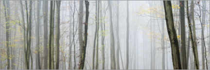 Premium poster Autumn forest with fog