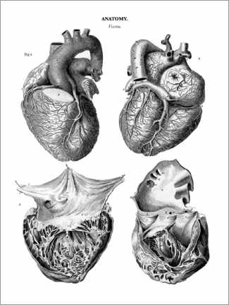 Premium poster Anatomy of the human heart