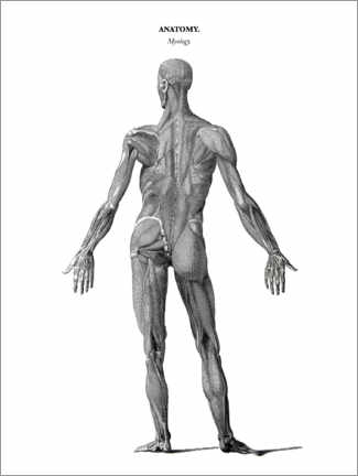 Acrylic print  Anatomy of Human Musculature - Thomas Milton