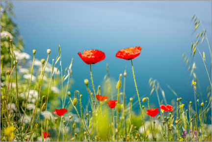 Premium poster Poppies meadow by the lake