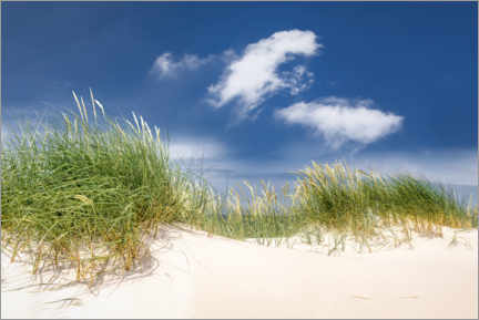 Wall sticker  Sunny dune landscape on the beach on the Baltic Sea - Mandfred Voss