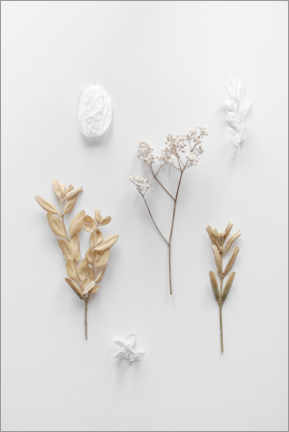 Premium poster Delicate finds from nature