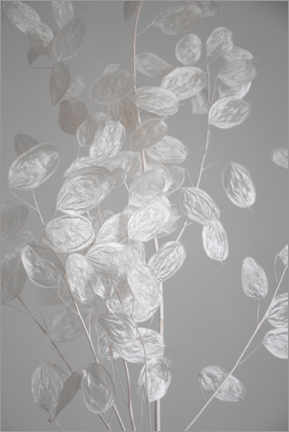 Foam board print  Silver leaf - branch of dried plant - Studio Nahili