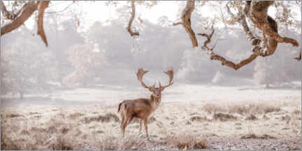 Premium poster Deer in the winter forest