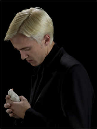 Premium poster The Half-Blood Prince - Draco Malfoy and bird