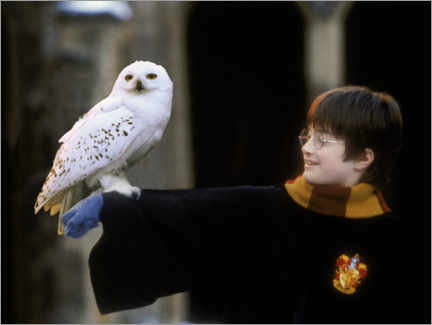 Wood print  Harry Potter and the Sorcerer's Stone - Harry & Hedwig