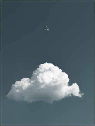 Aluminium print  Bird and cloud - Lukas Saalfrank