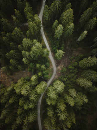 Gallery print  Path through the forest - Lukas Saalfrank
