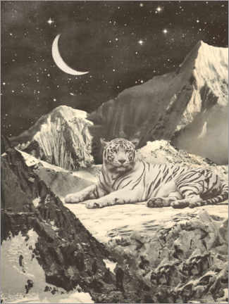 Premium poster Tiger in the mountains