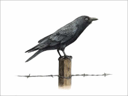 Premium poster  Country Crow - Terry Fan