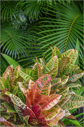 Wall sticker  Palm fronds and croton plants - Lisa S. Engelbrecht