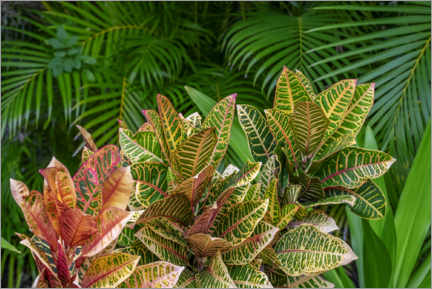 Canvas print  Palm fronds and croton plants II - Lisa S. Engelbrecht