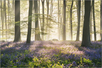 Premium poster  Forest with hare bells in spring - The Wandering Soul