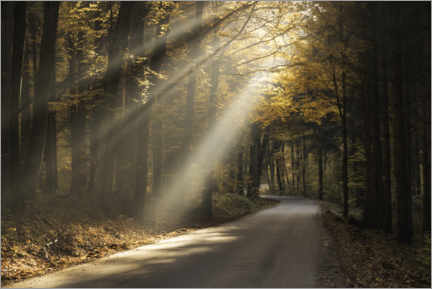 Canvas print  Rays of light in the autumn forest - Christian Möhrle