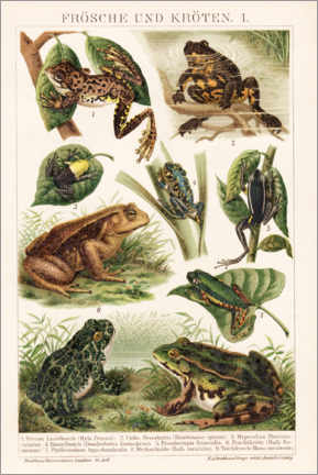 Canvas print  Frogs and toads