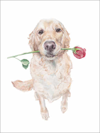 Gallery print  Golden Retriever with Rose - Wandering Laur