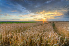 Wall sticker  Summer sunset in a cornfield - Michael Valjak