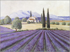 Gallery print  Lavender Fields - Franz Heigl