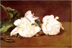 Gallery Print  Branch of White Peonies and Secateurs - Edouard Manet
