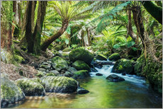 Gallery print  Rainforest in Tasmania - Matteo Colombo