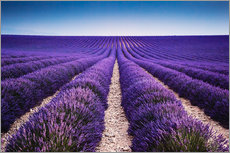 Wall sticker  Lavender field in Provence - Matteo Colombo