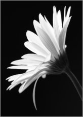 Gallery Print  The flower - Falko Follert
