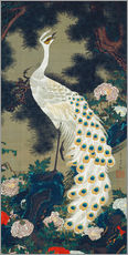 Gallery print  A white peacock under a pine tree - Itô Jakuchu