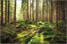 Gallery print  Spring awakening in the forest - Oliver Henze