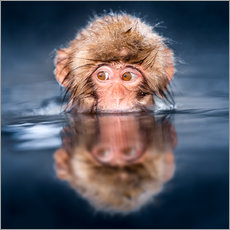 Wall sticker  Japanese Snow monkey bathing - Jan Christopher Becke