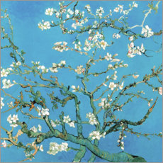 Premium poster Almond tree in bloom