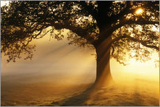 Wall sticker  Oak tree at sunrise - Jeremy Walker