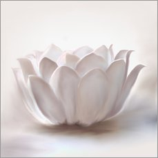 Gallery print  White lotus - Christine Ganz