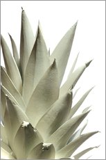 Gallery print  White pineapple - Neal Grundy