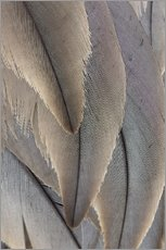 Gallery print  Crane Feathers - Paul D. Stewart