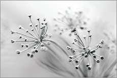 Gallery print  white flowers - Jens Berger