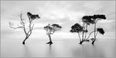 Gallery print  Tree silhouettes winding over a lake - Steven Fudge