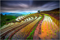 Gallery print  clouded rice field - Tetra