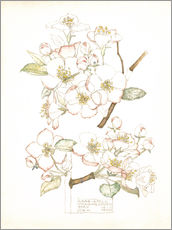 Wall sticker  Apple blossom - Charles Rennie Mackintosh