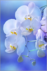 Wall sticker  Orchid - Atteloi