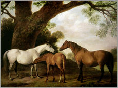 Wall sticker Two Shafto Mares and a Foal