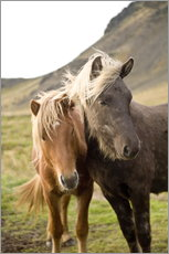 Wall sticker  Horses, South Iceland, Northern Europe