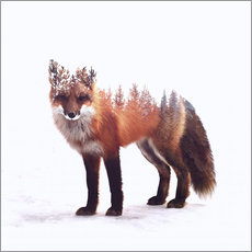Gallery print  Fox - Peg Essert