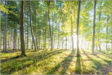 Gallery print  Forest at sunrise - Hannes Cmarits