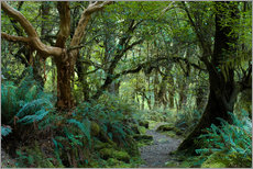 Gallery print  Primeval forest on kepler track, fiordland, new zealand - Peter Wey