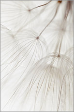 Wall sticker  Delicate dandelion - Thomas Herzog