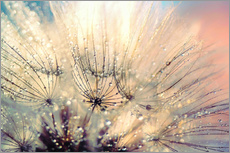 Wall sticker  Dandelion sunset - Julia Delgado