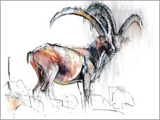 Gallery print  ibex - Mark Adlington
